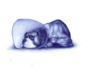 sick dog_cropped