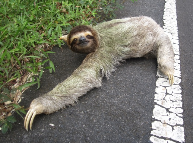 sloth[1]